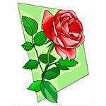 O·007: Алая роза