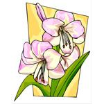 O·008: Белые лилии