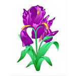 O·021: Фиолетовые ирисы