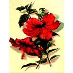 O·024: Аленький цветочек