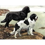 O·028: Собаки-спасатели: сенбернар и ньюфаундленд