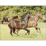 O·059: Стремительные кони