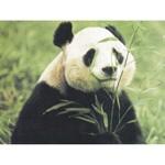 O·060: Панда ест бамбук