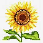 O·1020: Соняшник