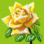 O·1202: Жовта троянда