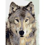 O·2416: Серый волк