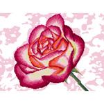 O·2435: Душистая роза