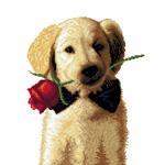 O·2440: Собачка-джентельмен