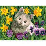 O·2445: Любопытный котенок