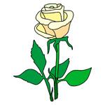 O·304: Жёлтая роза