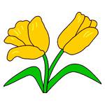 O·327: Жёлтые тюльпаны