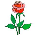 O·332: Красная роза