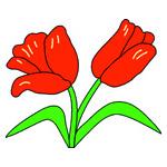 O·333: Красные тюльпаны