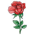 O·350: Алая роза