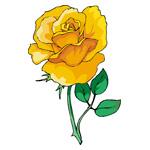 O·366: Аромат розы
