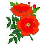 O·378: Плетистая роза