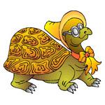 O·382: Черепаха Тортилла