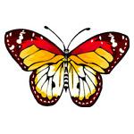 O·385: Тропическая бабочка