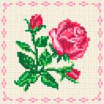 A36 Червона троянда в окантовці