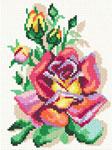 D24 Троянда