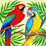 E52 Пара папуг