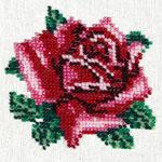 L426 Тендітна троянда