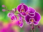 O133 Орхідея